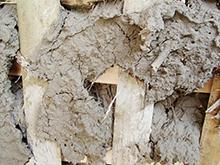 7.使用する壁土はスサを腐らせ繊維がたくさん入っています。固く粘い壁になります。